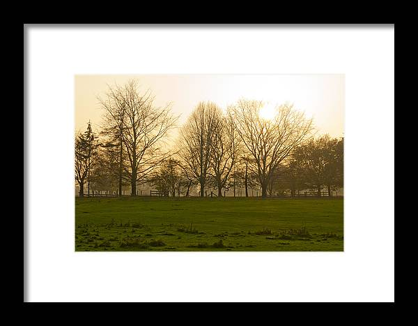 Trees Framed Print featuring the photograph Autumn Morning by David Isaacson