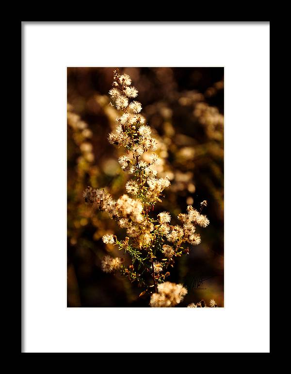 Autumn Framed Print featuring the photograph Autumn Morning by Mark Valentine