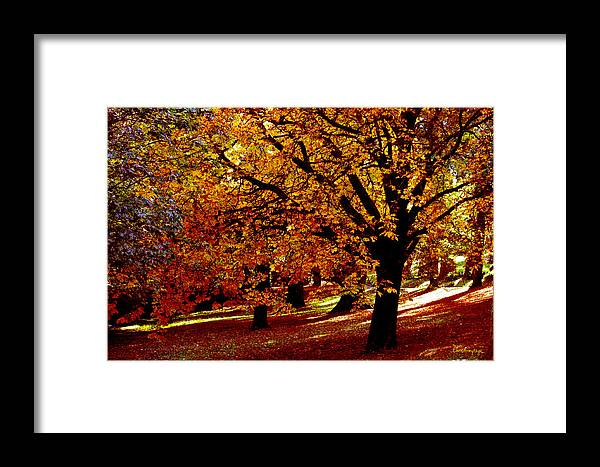 Autumn Framed Print featuring the photograph Autumn On Wombat Hill II by Chris Armytage