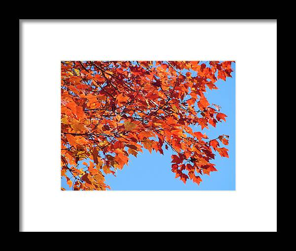 Autumn Framed Print featuring the photograph Autumn Orange by Lew Davis