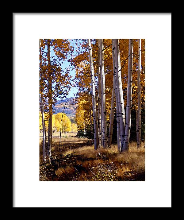Trees Framed Print featuring the photograph Autumn Paint Chama New Mexico by Kurt Van Wagner