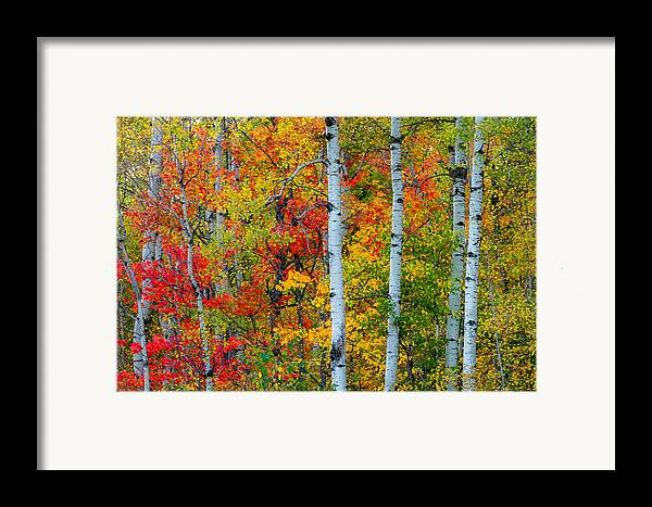 autumn Palette hawk Ridge lester Park lake Superior duluth minnesota fall Color Birch seven Bridges Rd Trees Nature greeting Cards mary Amerman Framed Print featuring the photograph Autumn Palette by Mary Amerman