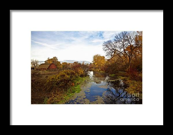 Autumn Framed Print featuring the photograph Autumn Remnants by Marcus Angeline