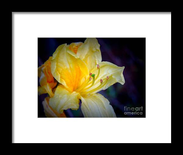 Azalea Framed Print featuring the photograph Autumn Respite by Renee Trenholm