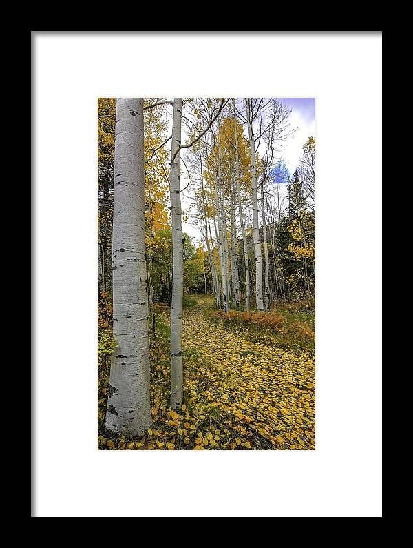 Landscape Framed Print featuring the photograph Autumn Stroll by Bill Sherrell