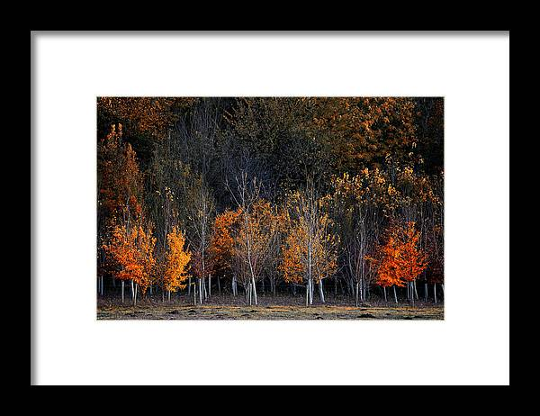 Wandlebury - Cambridge Framed Print featuring the photograph Autumn Trees by GuangYing WuJie