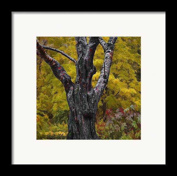 Autumn Framed Print featuring the photograph Autumn Trees3 by Vladimir Kholostykh