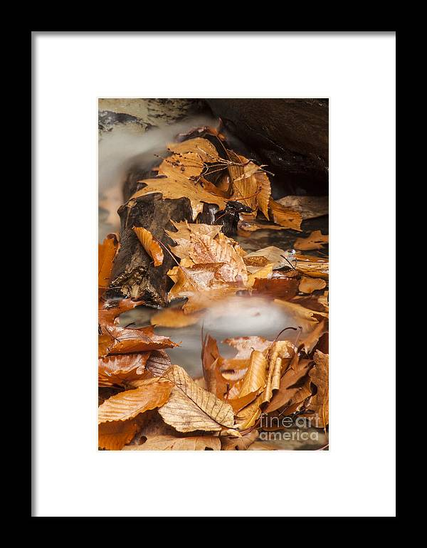 Waterfall Framed Print featuring the photograph Autumn Water Eddy by Darleen Stry