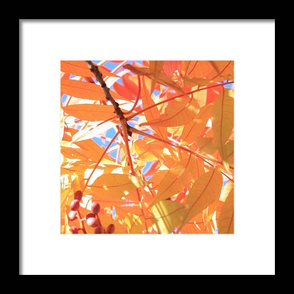 Fall Framed Print featuring the photograph Autumn's Array 24 by Penelope Moore
