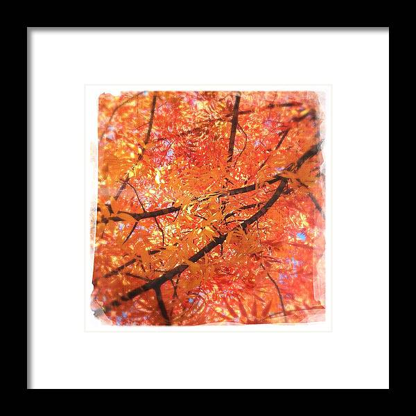 Fall Framed Print featuring the photograph Autumn's Array 4 by Penelope Moore