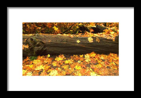 Fall Foliage Framed Print featuring the photograph Autumn's Gold by Wade Crutchfield