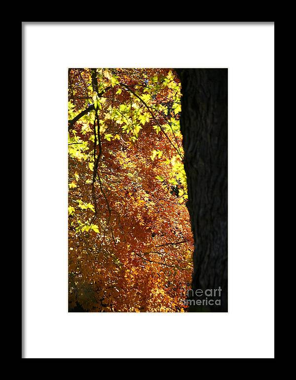 Flower Framed Print featuring the photograph Autumn's Golds by Susan Herber