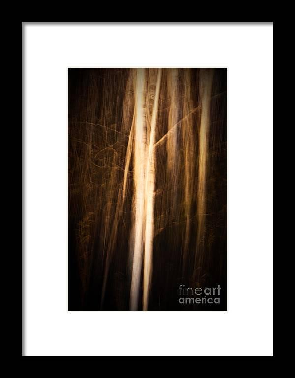 Art Framed Print featuring the photograph Autumn's Promise 11 by Joe Mamer