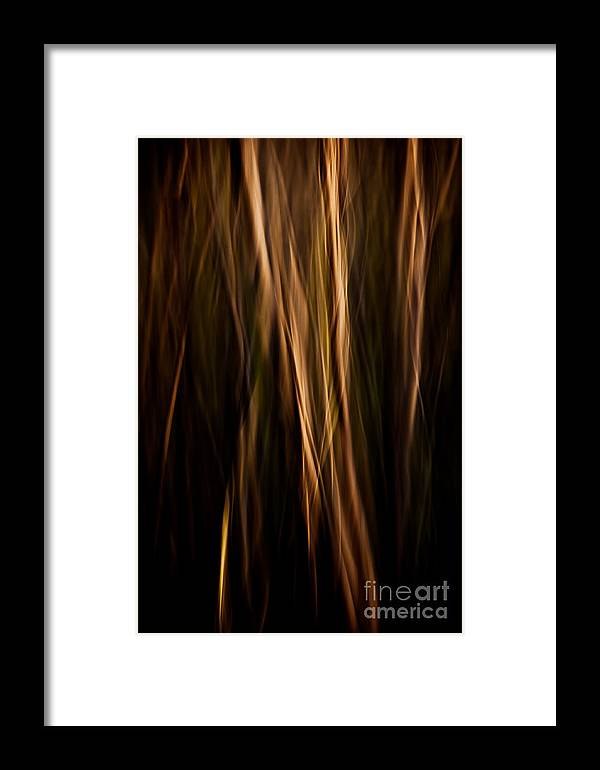 Art Framed Print featuring the photograph Autumn's Promise 12 by Joe Mamer