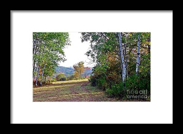 Western Ny State Framed Print featuring the photograph Avenue Of Poplars by Christian Mattison