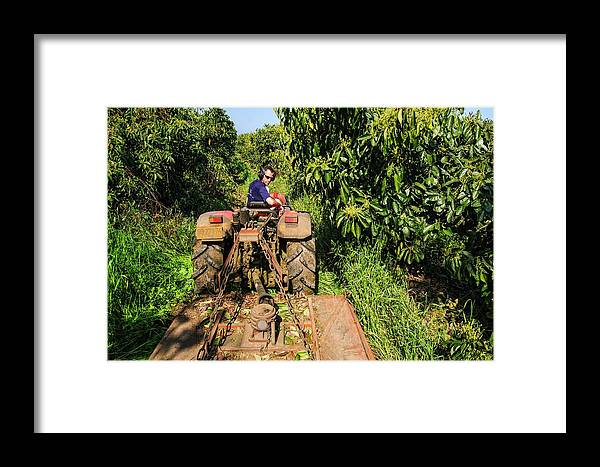 Agriculture Framed Print featuring the photograph Avocado Plantation. by Photostock-israel