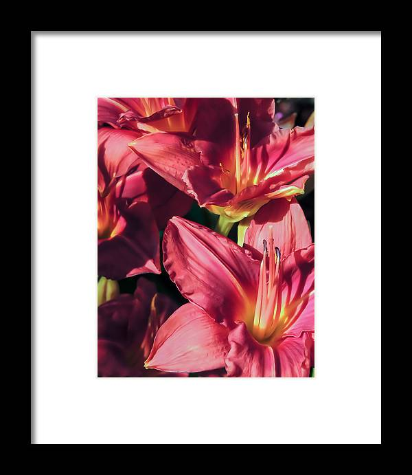 Flowers Framed Print featuring the photograph Azalea Riot by Robert Mitchell