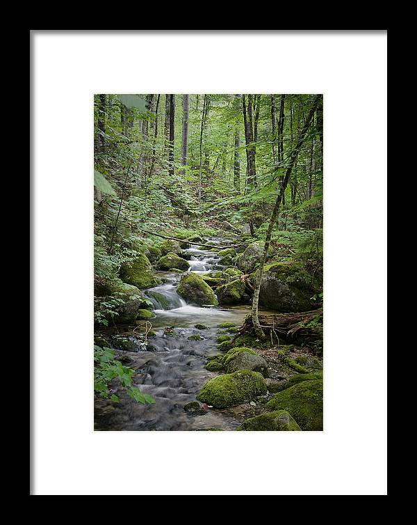 Brook Stream Forest Maine Baxter Katahdin Green Woods Thick Moss Framed Print featuring the photograph Babbling Baxter Brook by John Maciel