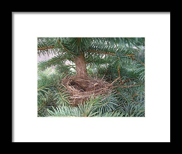 Birds Framed Print featuring the photograph Baby Birds by Jennifer Dishon