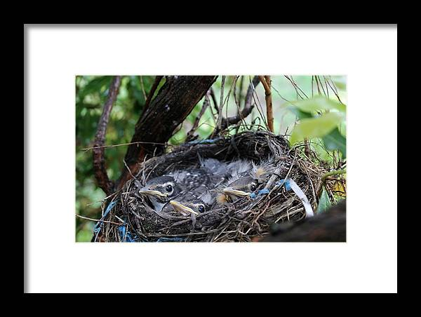 Baby Birds Framed Print featuring the photograph Baby Birds by Lori Rossi