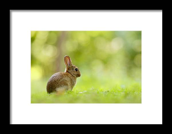 Afternoon Framed Print featuring the photograph Baby Bunny In The Forest by Roeselien Raimond