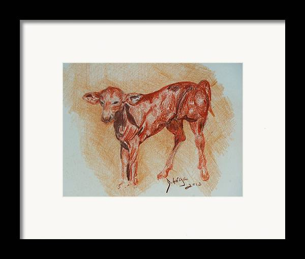 Baby Animals Framed Print featuring the drawing Baby Calf by Deborah Gorga