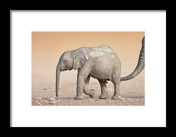Wild Framed Print featuring the photograph Baby Elephant by Johan Swanepoel