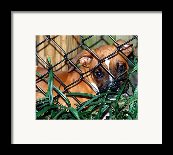 Puppy Framed Print featuring the photograph Baby Grace by Skip Willits