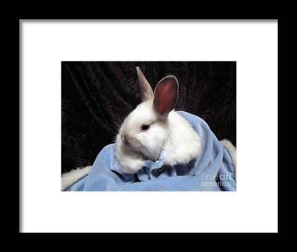 Rabbit Framed Print featuring the photograph Baby It's Cold Outside by Renee Trenholm