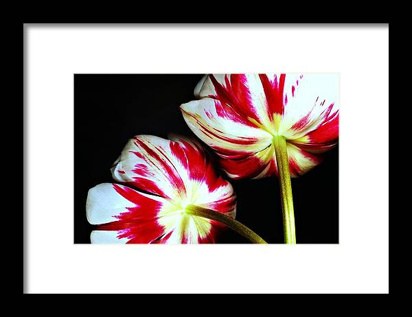 Flowers Framed Print featuring the photograph Back Splash by Diana Angstadt