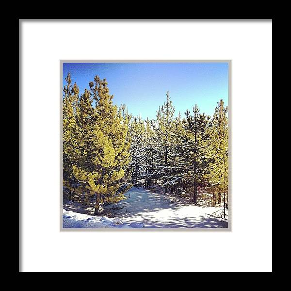 Canada Framed Print featuring the photograph Backcountry Trees Near Fox Creek Alberta by Eric Dick