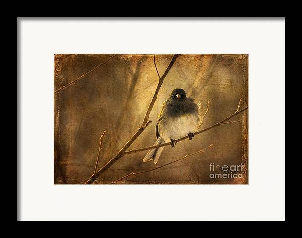 Bird Framed Print featuring the photograph Backlit Birdie Being Buffeted by Lois Bryan