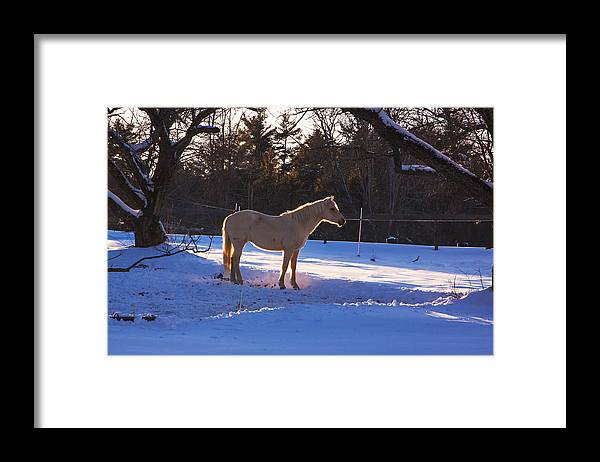 Bonnyvale Road West Brattleboro Vermont Framed Print featuring the photograph Backlit Horse by Tom Singleton