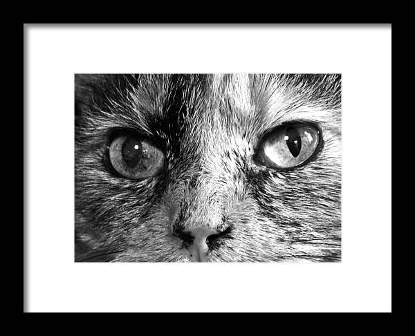 Cat Framed Print featuring the photograph Bailey 1 Black And White by Mary Bedy
