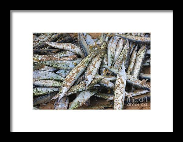 Bait Framed Print featuring the photograph Bait by The Art of Alice Terrill