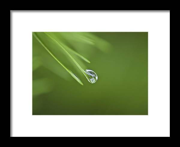 Drip Framed Print featuring the photograph Balancing Act by Sarah Crites