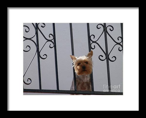 Dog Framed Print featuring the photograph Balcony Dog by Phil Banks