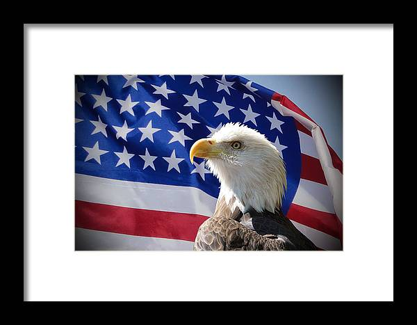 Eagle Framed Print featuring the photograph Bald Eagle And American Flag by Alan Hutchins