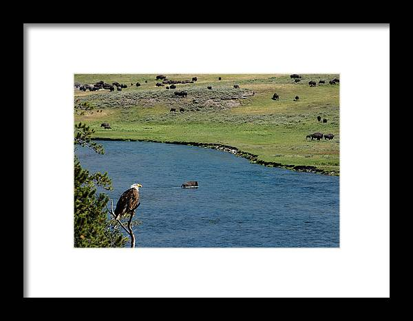 Yellowstone River Framed Print featuring the photograph Baldy And Bull by Randall Branham