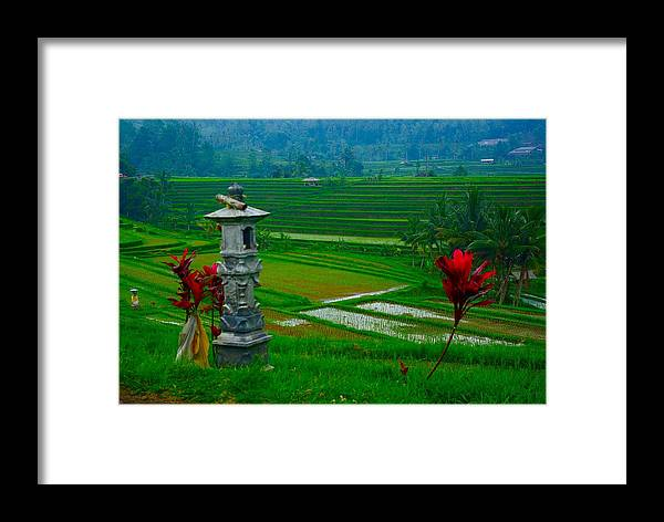 Red Framed Print featuring the photograph Bali And 2 Red Flowers by Andy Fletcher