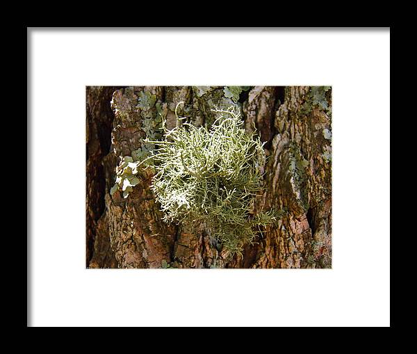 Moss Framed Print featuring the photograph Ball Of Moss by Nick Kirby