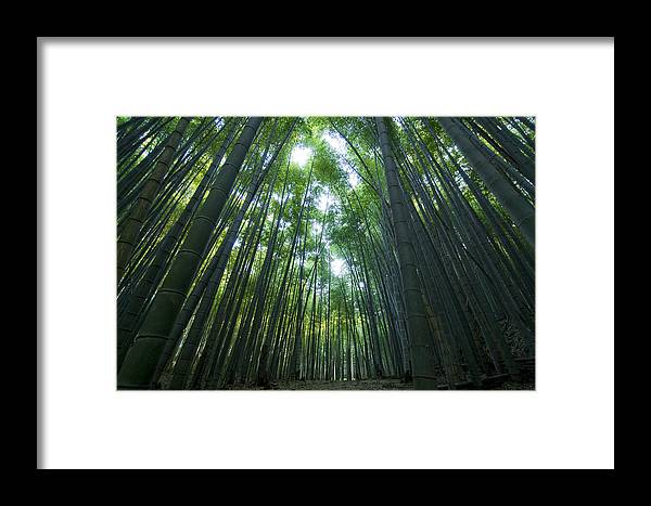 Bamboo Framed Print featuring the photograph Bamboo Forest by Aaron Bedell
