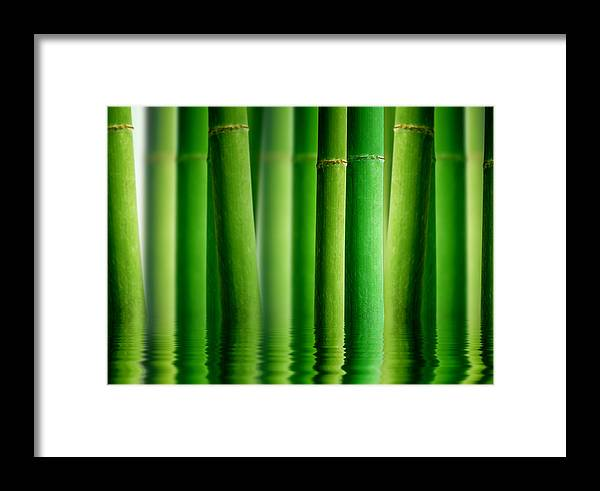 Bamboo Framed Print featuring the photograph Bamboo Forest With Water Reflection by Aged Pixel