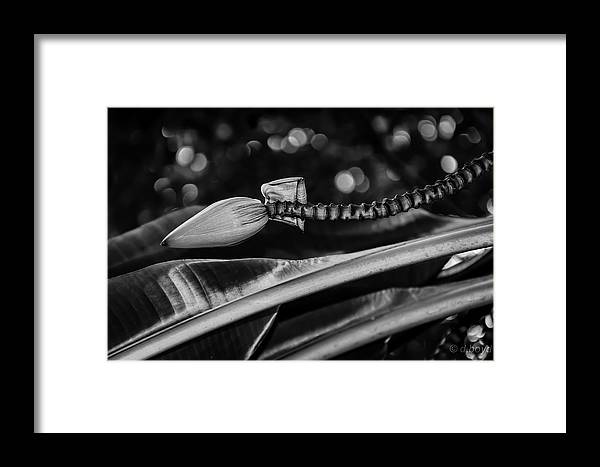 Fall Framed Print featuring the photograph Banana Bokeh by Diana Boyd
