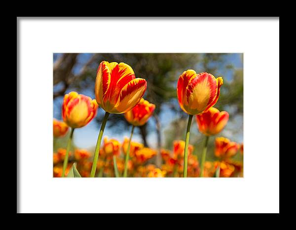 Tulip Framed Print featuring the photograph Banja Luka From Below by Thomas Parsons
