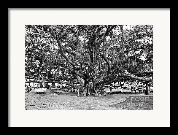 Banyan Tree Framed Print featuring the photograph Banyan Tree by Scott Pellegrin