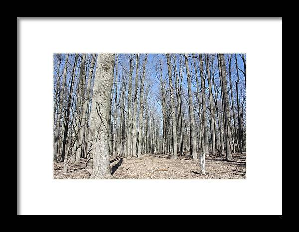 Trees Framed Print featuring the photograph Bare Forest by Robert White