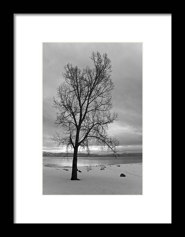 Tahoe Framed Print featuring the photograph Bare Tree On A Wintery Tahoe Shoreline by Scott Lenhart