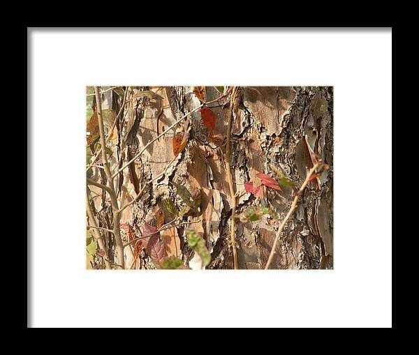 Tree Bark Framed Print featuring the painting Bark IIi by Ione Hedges