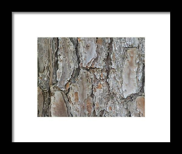 Tree Bark Framed Print featuring the painting Bark Iv by Ione Hedges